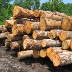 149462 1a8de1 300x300 - تحقیق در مورد چوب